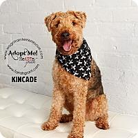 Adopt A Pet :: Kincade - Omaha, NE