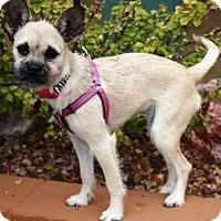 Adopt A Pet :: Azza - Gilbert, AZ
