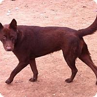 Adopt A Pet :: GODIVA - Sebec, ME