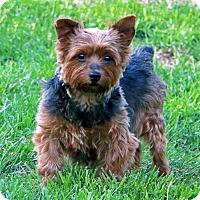 Adopt A Pet :: MJ - Mount Gretna, PA