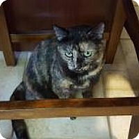 Adopt A Pet :: Dottie - Berkeley Hts, NJ