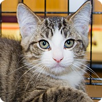 Adopt A Pet :: Sloan - Irvine, CA