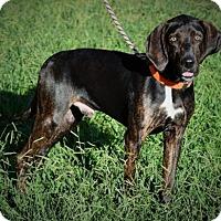 Adopt A Pet :: Chopper - Doylestown, PA