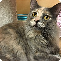 Adopt A Pet :: Keesha - Foothill Ranch, CA