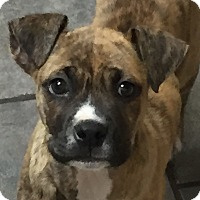 Adopt A Pet :: Tyson - Allentown, PA