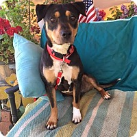 Beagle Mix Dog for adoption in Toluca Lake, California - Bessie