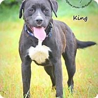 Adopt A Pet :: King - Wymore, NE