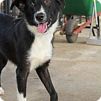 Adopt A Pet :: Max - Leslie, AR