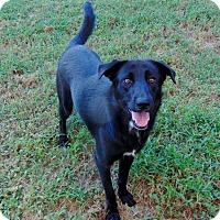 Adopt A Pet :: Dee Dee - Lufkin, TX