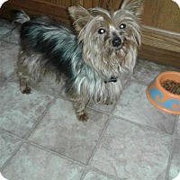 Adopt A Pet :: Ellie - Goodyear, AZ