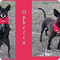 Adopt A Pet :: Ophelia - Hillsboro, TX