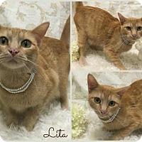 Adopt A Pet :: Lita - Joliet, IL