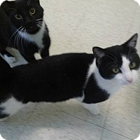 Adopt A Pet :: Bill and Ted - Northfield, OH