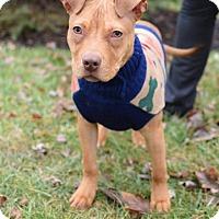 Adopt A Pet :: Tiggy - Dayton, OH