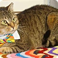 Adopt A Pet :: Rocky - Lansing, KS