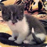 Adopt A Pet :: Richie - Berlin, MD