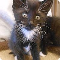 Adopt A Pet :: Thor - Reston, VA