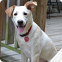 Adopt A Pet :: *Josie - PENDING - Westport, CT