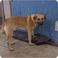 Adopt A Pet :: Freeway - Zanesville, OH