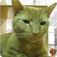 Adopt A Pet :: Elsa - Jenkintown, PA