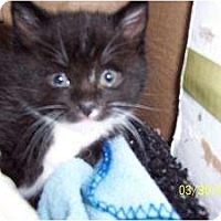 Adopt A Pet :: Mitch - Island Park, NY