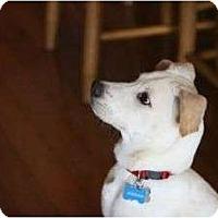 Adopt A Pet :: Jordan - Cumming, GA