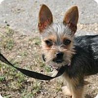 Adopt A Pet :: Aerabella - Austin, TX
