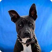 Adopt A Pet :: Eric - tucson, AZ