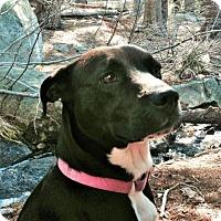 Adopt A Pet :: Onyx * - La Honda, CA
