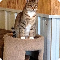 Adopt A Pet :: Gingersnap *Reduced adoption fee FIV positive * - Kyle, SD