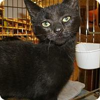 Adopt A Pet :: Cinders - Jackson, NJ