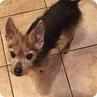 Adopt A Pet :: Tobie - N. Babylon, NY