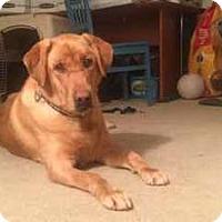 Adopt A Pet :: Sammie - San Francisco, CA