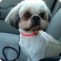 Adopt A Pet :: Corbin VanCleve - Urbana, OH