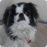 Adopt A Pet :: Ladybug - Alamosa, CO