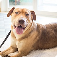 Adopt A Pet :: Princess Buttercup - Dallas, TX
