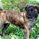 Adopt A Pet :: NALA BEAR