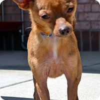 Adopt A Pet :: Tex - Bridgeton, MO