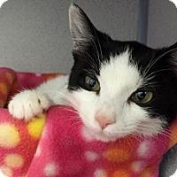 Adopt A Pet :: Dandie - Fort Collins, CO