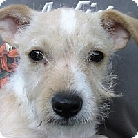 Adopt A Pet :: Mikey - Germantown, MD