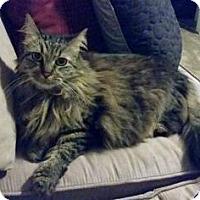 Adopt A Pet :: Nika - Bulverde, TX