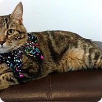 Adopt A Pet :: Junebug - Roanoke, VA