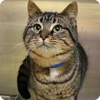Adopt A Pet :: Danny 33984532 - Westampton, NJ
