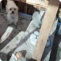 Adopt A Pet :: Neutron - Thousand Oaks, CA