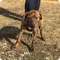 Adopt A Pet :: Enne (last of the litter!!) - Plainfield, CT