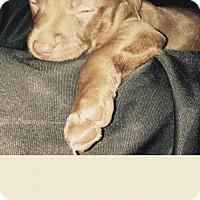 Adopt A Pet :: Ally - Yreka, CA