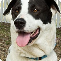 Adopt A Pet :: Ruthie/Ruby Tuesday - Rockport, TX
