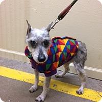 Adopt A Pet :: Betty - South Amana, IA