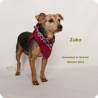 Adopt A Pet :: Zuko - Sherman Oaks, CA