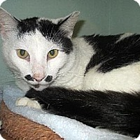 Adopt A Pet :: Charlie Chaplin - Palm City, FL